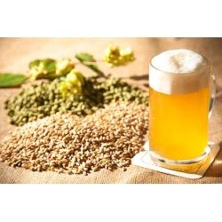 Workshop Cerveja Artesanal