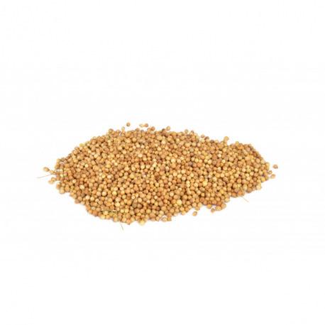Sementes de Coentro 50 gramas